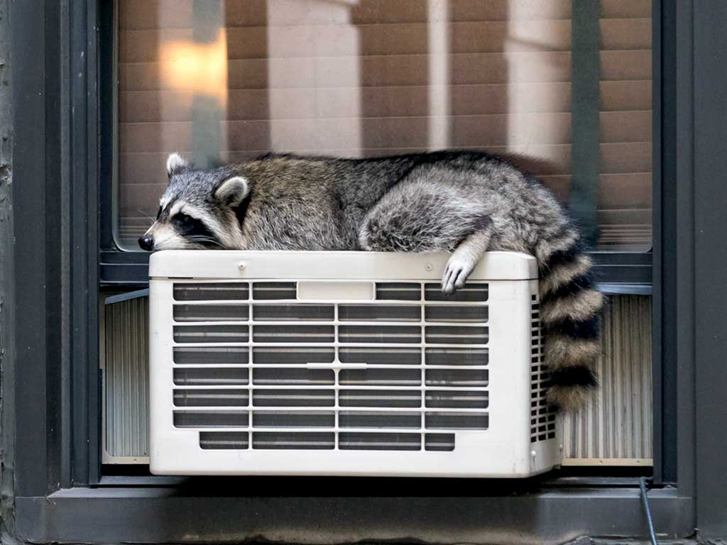 Ditch Your Window Air Conditioner For New York City Central Cooling